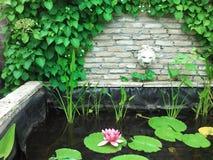 Teich mit Wasserlilie Stockfotos