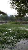 Teich mit Wasserlilien Lizenzfreies Stockfoto
