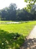 Teich mitten in dem Wald lizenzfreie stockfotos