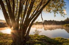 Teich morgens hinter dem Baum Lizenzfreie Stockbilder