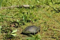 Teich-Schildkröte aalt sich in Sun Lizenzfreies Stockbild