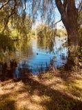 Teich am Sommer-Tag lizenzfreies stockfoto