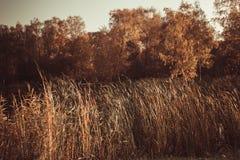 Teich umgeben durch Bäume mit gelb gefärbtem Laub und warmem sonnigem Wetter des trockenen Dickichtherbstes lizenzfreies stockbild