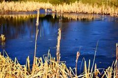 Teich umgeben durch Stock lizenzfreie stockbilder
