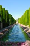 Teich umgeben durch Zypressen Stockbilder