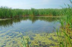 Teich und blauer Himmel Lizenzfreie Stockfotografie
