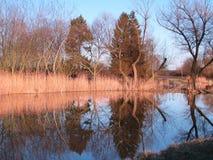 Teich und Fichten Stockfotografie