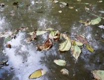 Teich und leafage Lizenzfreies Stockbild