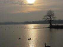 Teich und Sonnenaufgang während des Winters Lizenzfreie Stockbilder