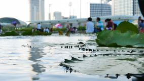 Teich und unscharfe Leute nahe Art Science Museum in Singapur stock video