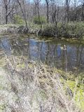 Teich 3 stockbild