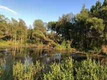 Teich, Wasser, Wald, Natur, Sommer, Sumpf, blauer Himmel stockbild