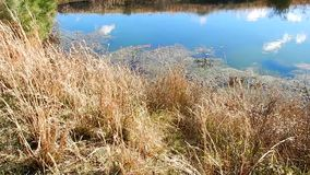 Teich-Wolken-Reflexionen, Lilly Pads Grandview State Park, WV stock footage