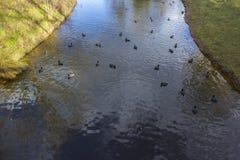 Teichhühner in Victoria Park, London Stockfoto