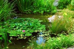 Teichlandschaftsgestaltung Stockbilder