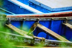 Teichreiher Stockfoto
