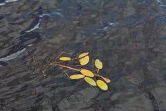 Teichunkraut und reflektierendes Wasser Lizenzfreie Stockfotos