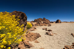 Teide国家公园 图库摄影