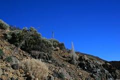 Teide国家公园 库存图片