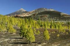 teide национального парка Стоковые Изображения RF