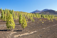 Teide Stockfoto