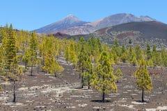 Teide Royaltyfria Bilder
