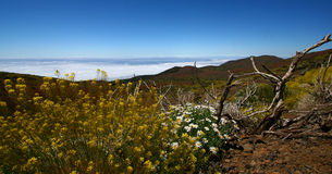 Teide beauty Stock Photo
