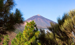 Teide Behind Trees Royalty Free Stock Images