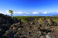 Teide-Berg in Teneriffa Kanarische Inseln Wald Stockfotografie