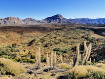 Teide National Park Stock Photo