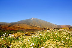 Teide National Park mountain in Tenerife Stock Images