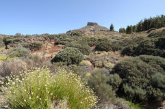Teide National Park, Tenerife Stock Images