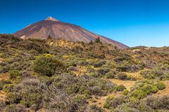 Teide National Park Stock Images