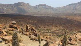 Teide National Park in Tenerife at Canary Islands stock video