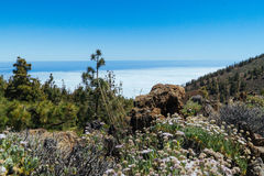 Teide National Park in Tenerife Royalty Free Stock Photography
