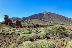 Teide National Park in Tenerife. A great contrast to the barren stone and volcanic landscape and the green plants royalty free stock photo