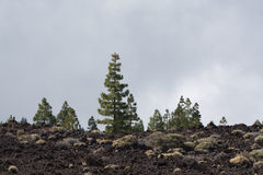 Teide National Park, Tenerife - the most spectacular travel dest Stock Photography