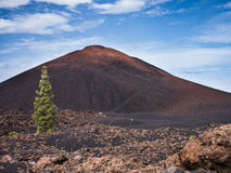Teide National Park, Tenerife. Photo taken on walk within the Teide National Park, Tenerife. Pine tree in foreground Royalty Free Stock Images