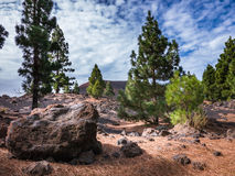 Teide National Park, Tenerife. Photo taken on walk within the Teide National Park, Tenerife. Pine trees in foreground Stock Photo