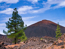Teide National Park, Tenerife. Photo taken on walk within the Teide National Park, Tenerife. Pine trees in foreground Royalty Free Stock Images