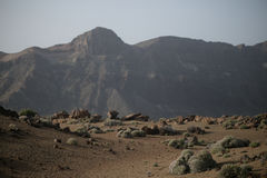 Teide nationalpark Arkivfoton