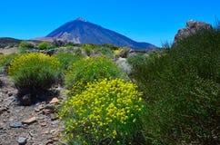 Teide Nationalpark, Tenerife stockbild