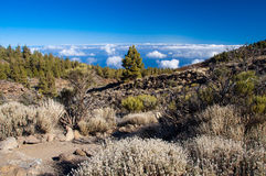 Teide notional park Stock Images