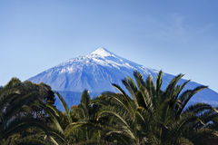 Teide and palms Stock Photos