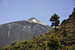 Teide vulkan Royaltyfri Foto