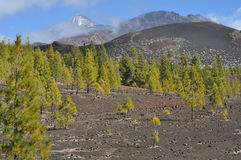 Teide z greenery i chmurnym niebem, Tenerife obrazy royalty free