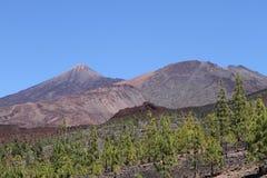 Teideberg, Tenerife Stock Afbeelding