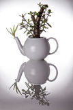 Teiera utilizzata come vaso insolito della pianta ornamentale Fotografia Stock