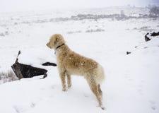 Teig που προσέχει την πτώση χιονιού στο βουνό νότιων πινάκων Στοκ Εικόνες
