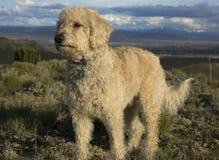 Teig på den Colorado platån Arkivfoton